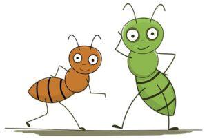 fear of ants